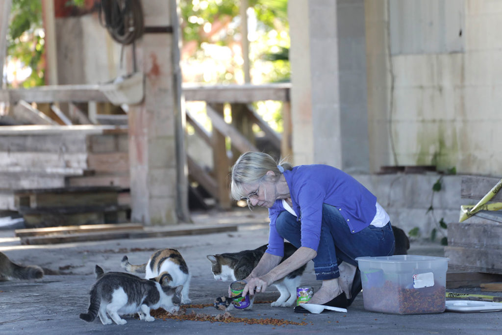 volunteer Barbara DuPont feeds healthy feral cats