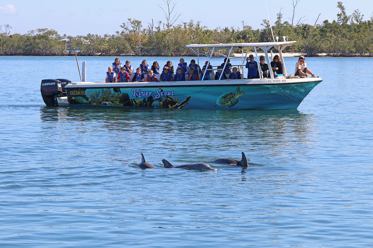dolphins in the Indian River Lagoon