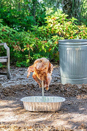 A brined and well-seasoned turkey is speared atop a stake stuck into the ground before being covered with a trash can and cooked.