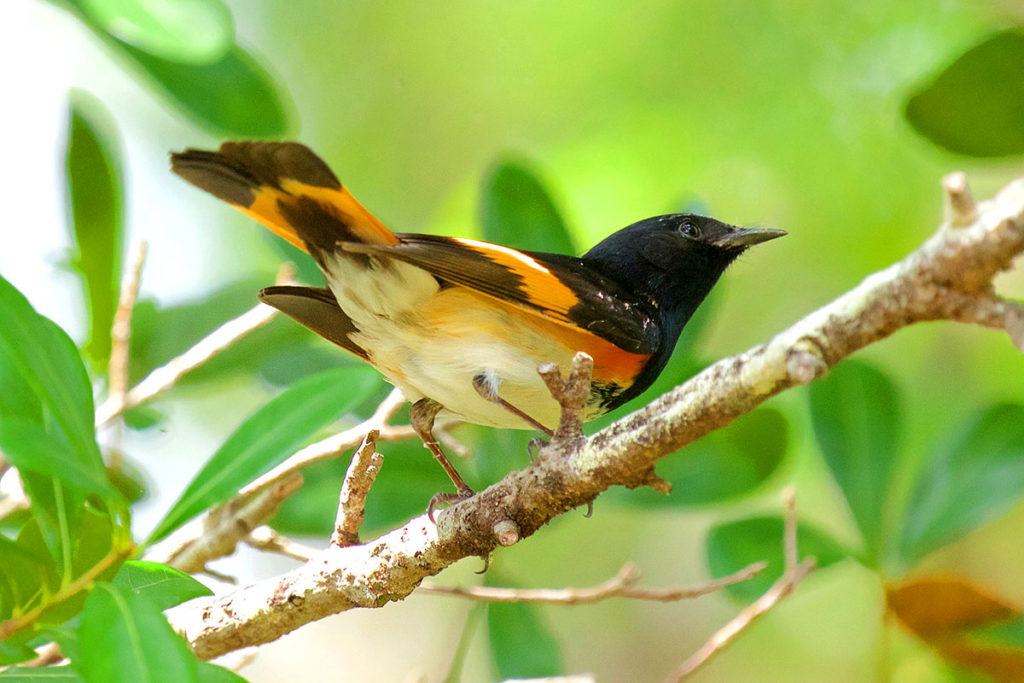 Birds To See In Spring On The Treasure Coast