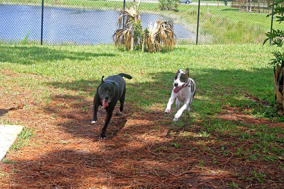 Dog Park, located off Cashmere Boulevard