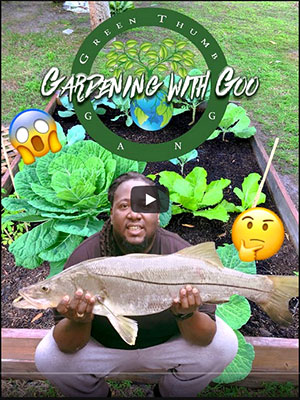 instructional video on using all of the scraps from fish as fertilizer