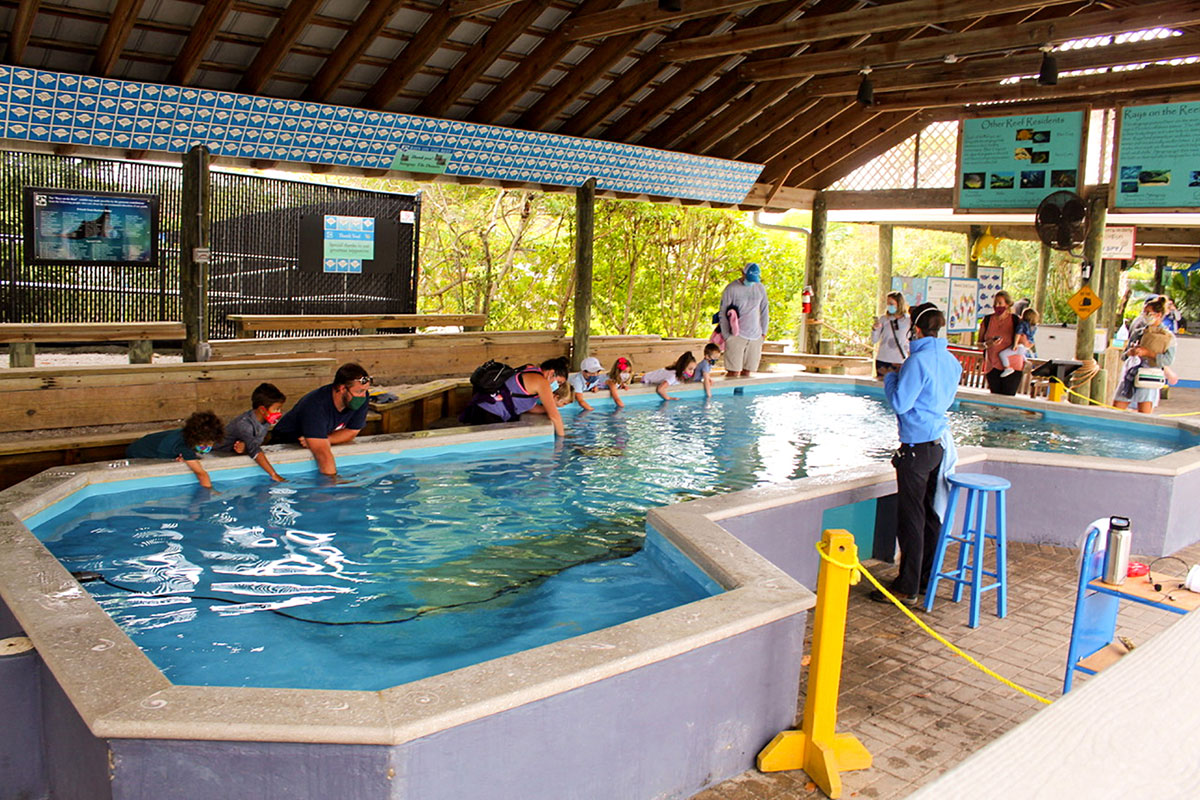 touch tank exhibits
